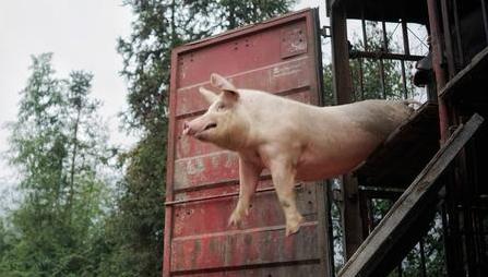 龙大肉食上半年盈利逾8500万元 年底或获生猪保险赔偿