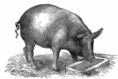 农业农村部:6家企业种公猪性能不合格率超20%