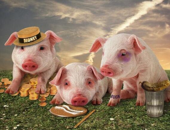 面对阴晴不定的猪价,养猪人如何做好风险控制?