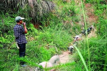 高山上办特色养猪场 双创助力云南老窝精准扶贫