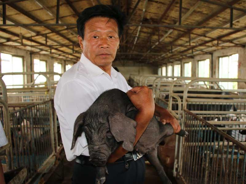 山东省首例克隆大蒲莲猪诞生