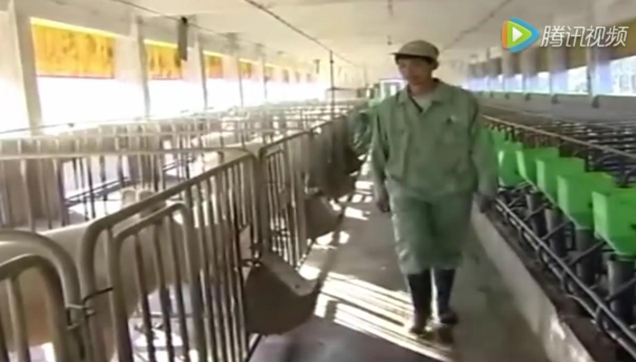 现代化养猪场圈猪粪怎么建设处理——科学养猪技术培训教程