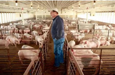 美国农民哭了,国内肉类存量创新高,价格大幅下降