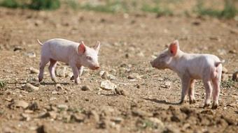 """养好""""脱贫猪""""致富有奔头?发展了适合的产业……"""