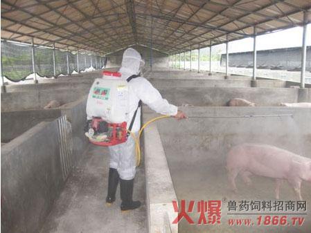 非洲猪瘟消毒技术!