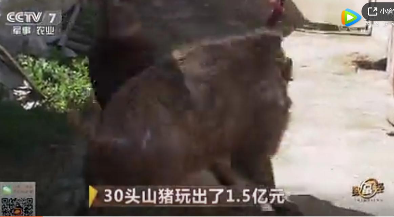 海南农民养殖30头山猪玩出了1.5亿销售额