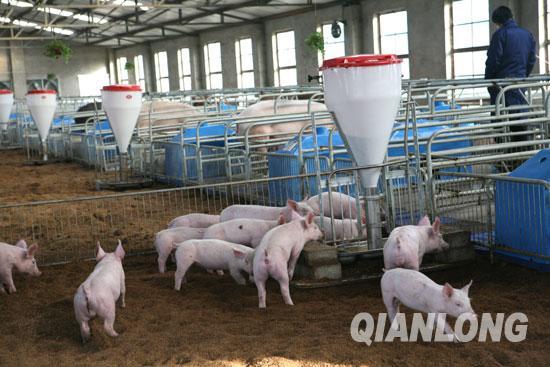 正大、牧原、新希望、温氏逆势扩张生猪产业