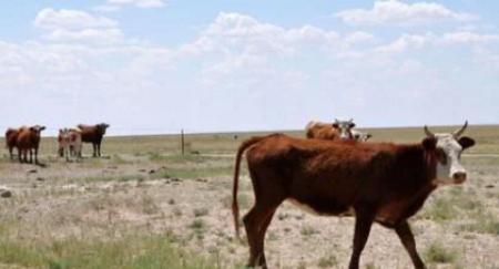 """内蒙古发现疑似牛炭疽疫情,区政府已下达""""疫区封锁令"""""""