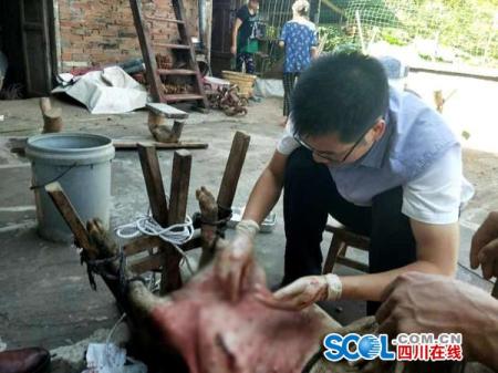 为这名农技员点赞!长达5小时,为贫困村民家的猪做手术!