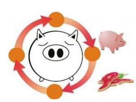 猪肉涨价了!央妈又头疼了!这背后有五大因素在推动