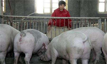 面对猪价下跌、非洲猪瘟横行,专家给养猪户支了三招,靠谱不?