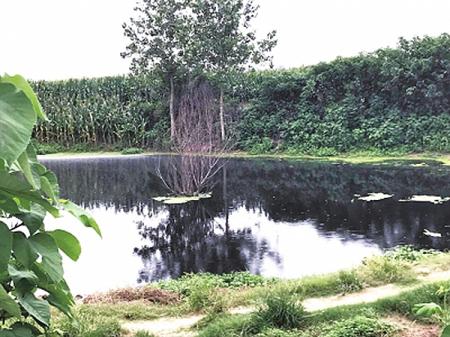 环保厅暗访:猪场藏玉米地染黑河塘被取缔