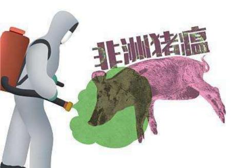 哪些地区和养殖场户需要重点关注非洲猪瘟?非洲猪瘟的传播途径有哪些?