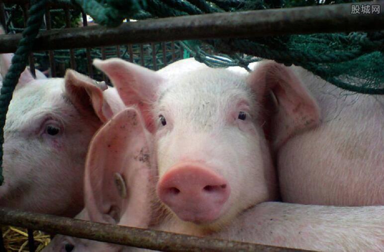 翁亚彪:非洲猪瘟来势汹汹, 猪场怎样防控?
