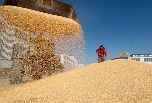 国家粮食和物资储备局:市场化加快 收购总体平稳