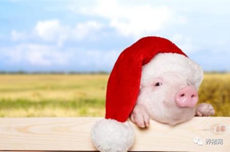 九月旺季猪价蓄势待涨! 但想金钵满盆还得注意?