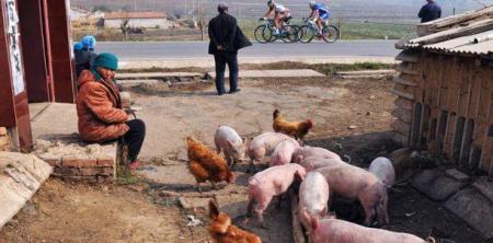非洲猪瘟首现中国,猪肉会弯道超车跑赢香菜吗?