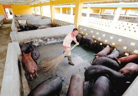 同样是在中国,为什么不同省份的猪价差距这么大?