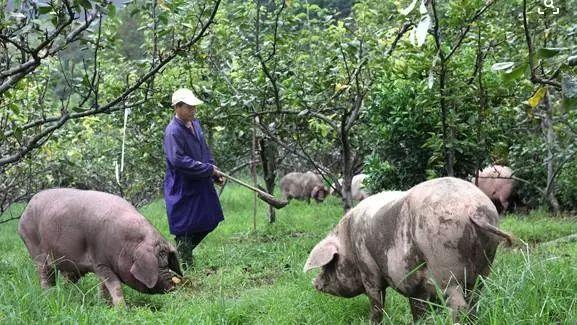 关于对种养大户采用农牧结合、种养循环模式给予奖补