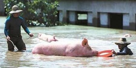 未来3天猪场警惕暴雨袭击!华南三省72万人受灾损失4.5亿!