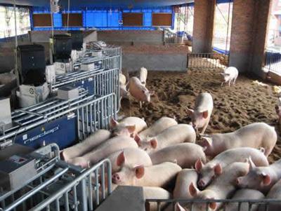 上海猪肉多产自苏浙沪,2600家养猪场无异常