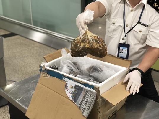 旅客违规携带12.6公斤猪肉进境,被厦门海关查获