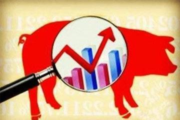 下半年生猪价格 预计将小幅上升