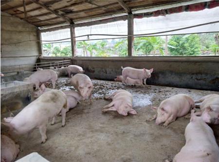 2018年09月17日全国各省生猪价格土杂猪价格报价表