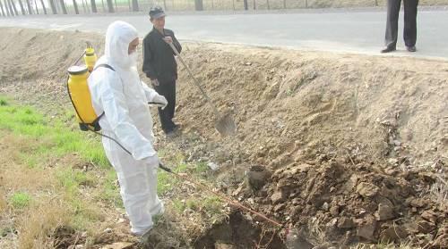 深埋法处置非洲猪瘟有效吗?对养猪业危害有多大?听农业部负责人怎么说?