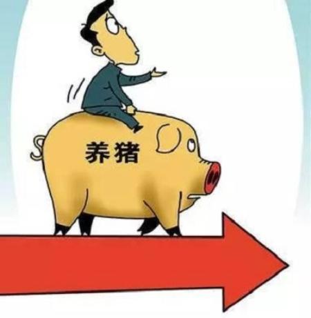 国庆期间猪价稳定,节后南北猪价差有望收窄