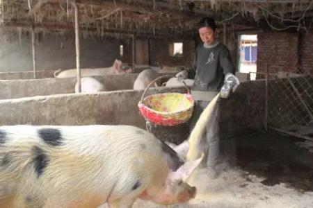 养猪业是否还存在政策红利?我们是否还能依靠养猪业致富?