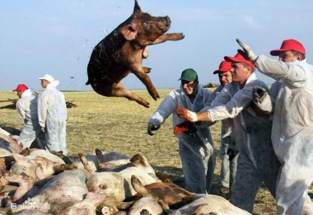 非洲猪瘟肆虐,这两个国家一天连发17起