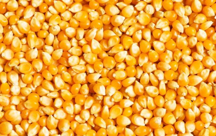 疫情扩散——或致新玉米上行乏力