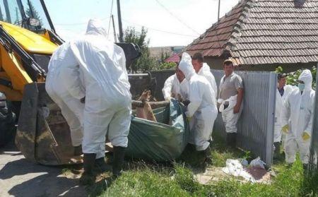 新发2起!罗马尼亚和匈牙利发生非洲猪瘟疫情
