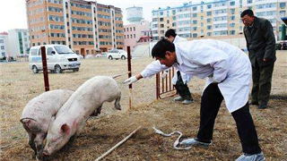云南发生非洲猪瘟疫情,部分上市公司亦受整体疫情影响