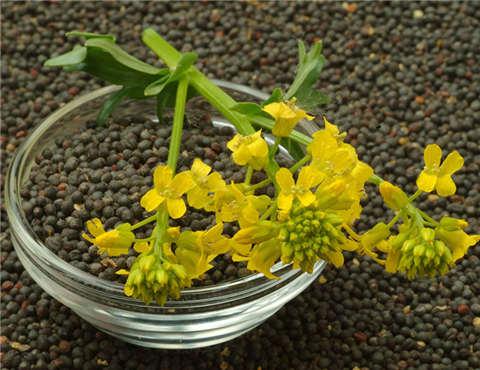 海关总署:允许进口符合要求的印度菜籽粕