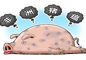 千方百计确保不发生猪瘟疫情,为脱贫攻坚保驾护航