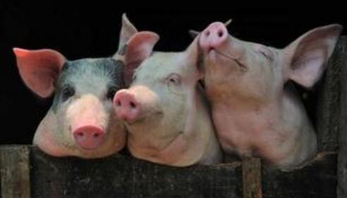 广西:前三季度生猪出栏2578.7万头,同比增长3.7%