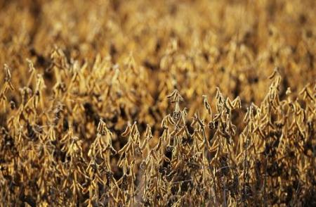 持续贸易战可能导致美国大豆种植面积削减900万英亩