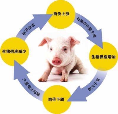 """大数据预测""""猪周期"""": 明年存栏下降但未必会涨价"""