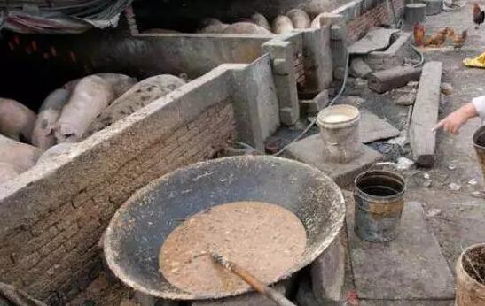 台湾:泔水喂猪至少高温蒸煮一小时 否则罚款