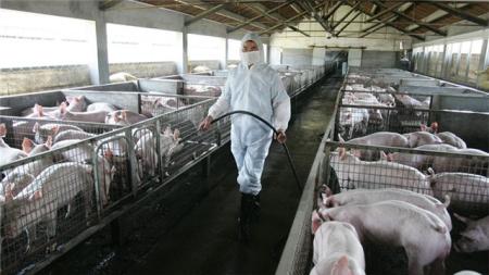 如何防止非瘟进入猪场之六:消毒工作