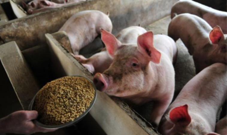 防止非瘟进入猪场之七:生物安全评估清单