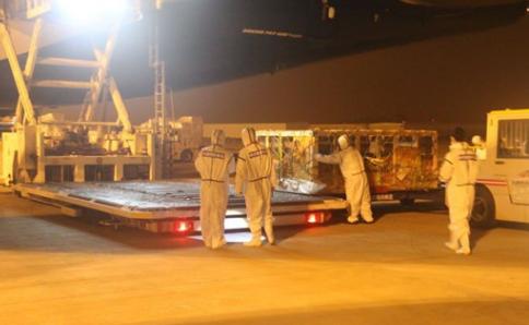 385头加拿大种猪在天津通过进口隔离检疫