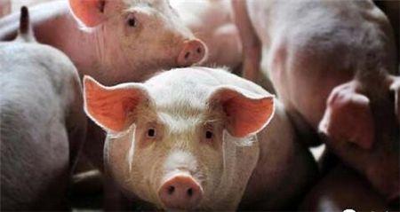 湖南安乡县无害化处理2吨入境生猪产品