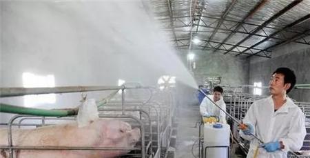 冬季如何降低猪舍内的氨气,减少呼吸道疾病的发生?