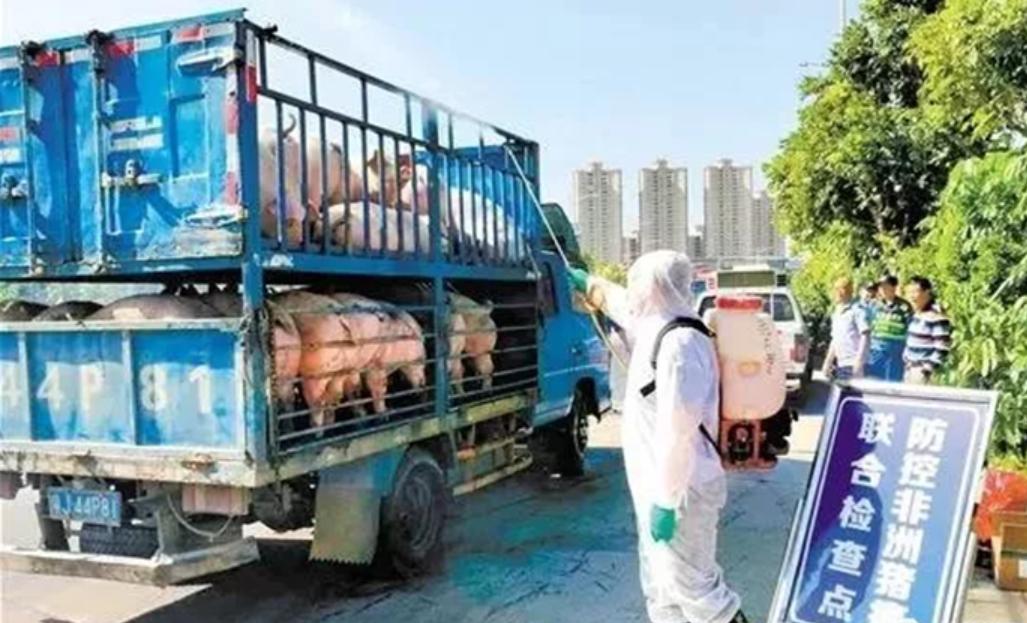 """非瘟疫情呈""""合围之势""""!四川全面禁止猪肉入省,广东全力阻击"""