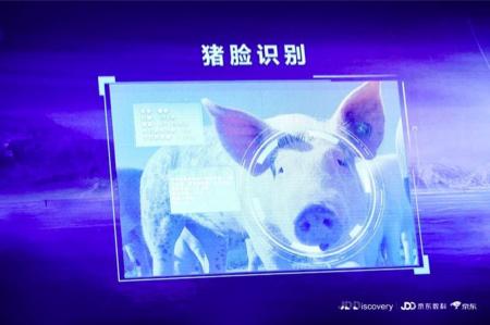 """京东宣布要进军养猪业,还推出了""""猪脸识别"""""""