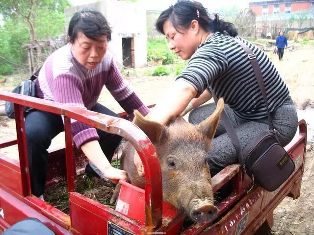 马云放豪言,未来十年农民工消失,养猪户们的春天来了!