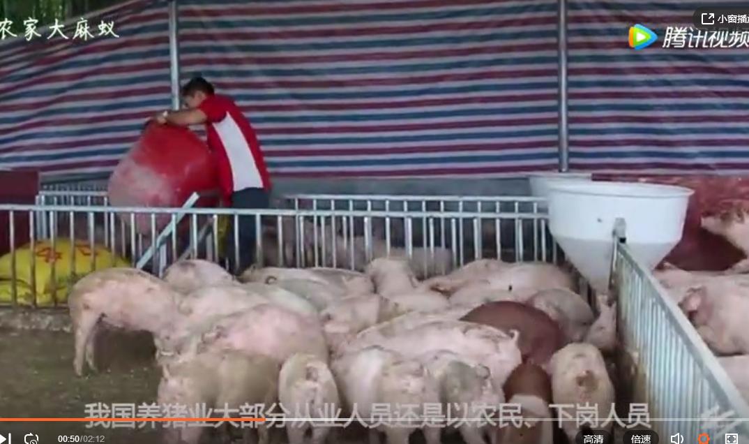农村养猪户们,这五个问题需要注意了!